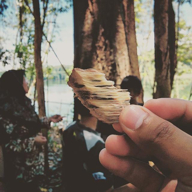 kulit kayu
